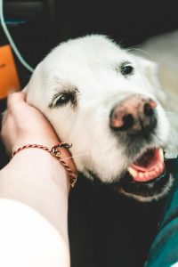 Benefits Of Training An Adult Dog