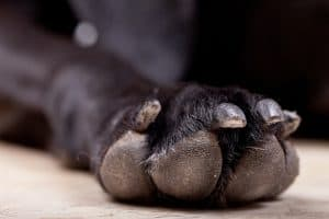 How Do I Cut My Dog's Nails if They're Dark