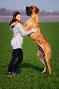How To Choose The Right Personal Dog Trainer