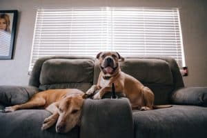 Is Jumping Really Bad for Dogs