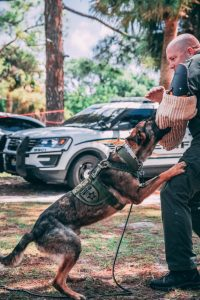 Police Dogs Imported From Germany Have A German Background