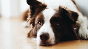 Things to Consider Before Restraining Your Dog