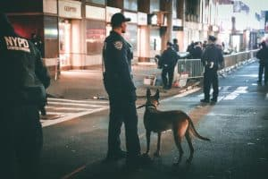 Why Are Police Dogs Trained In German And Other Languages