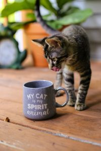 How Do Cats React To The Smell Of Coffee