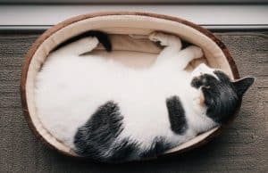 How Much Do Cats Sleep Anyway