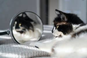 Reasons Why Cats Scratch Windows and Mirrors