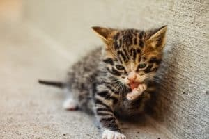 Taking Care Of Kittens And Older Cats In Cold Weather