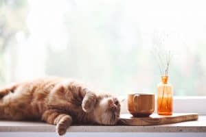What Should I Do If My Cat Ingests Coffee