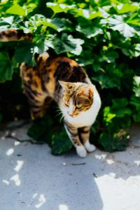 Why Your Cat Is Obsessed with Catnip