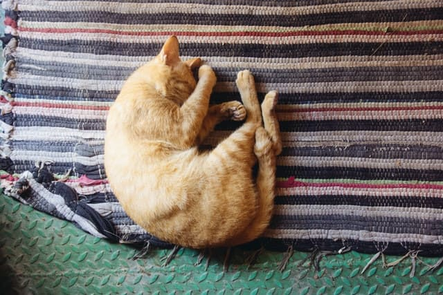 Curled-Up Position