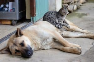 Dogs Are Smarter Than Cats