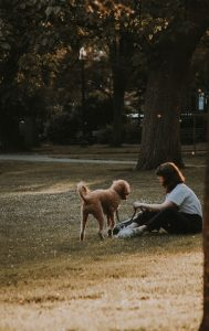 How Do Dogs Show Affection To Humans