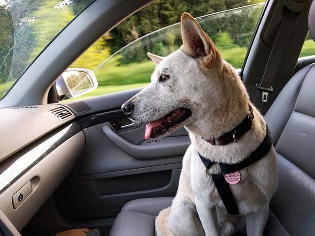 How To Seatbelt A Dog In A Car