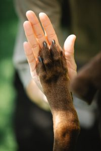 Why Dogs Lick Their Paws