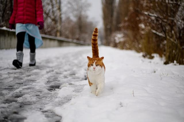 How Do Cats Handle Cold Temperatures