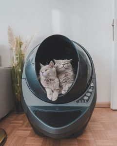 How Many Litter Boxes Should I Get My Cats