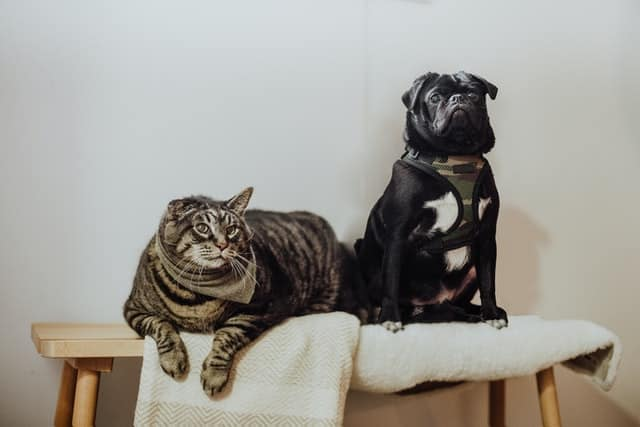 So, What Is The Difference Between Cat And Dog Food