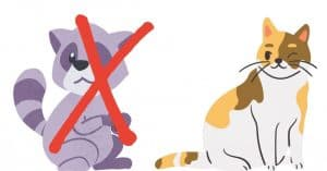 What Will Repel Raccoons But Not Cats