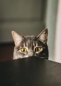 What is Ash In Cat Food