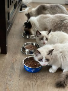 Why is Cat Food Bad for Dogs