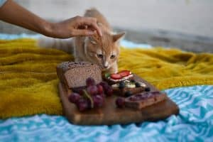 Benefits of feeding your cat with homemade food