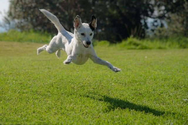 Health Benefits Of Feeding Your Dog A Raw Food Diet