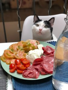 How To Make Healthy Homemade Cat Food
