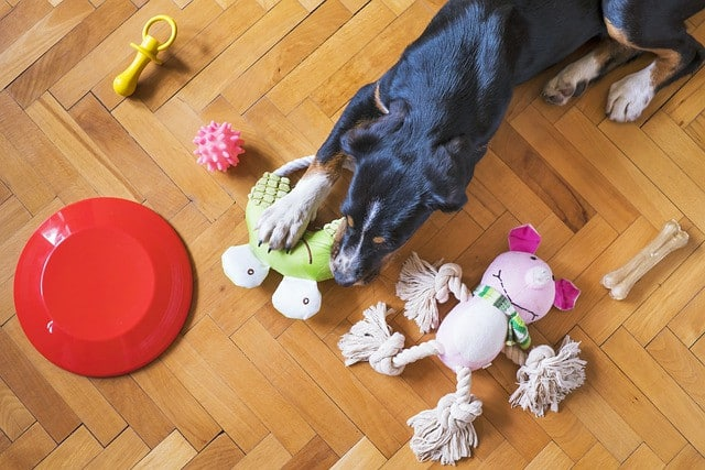 Why Do Dogs Like To Chew Out Squeaky Toys